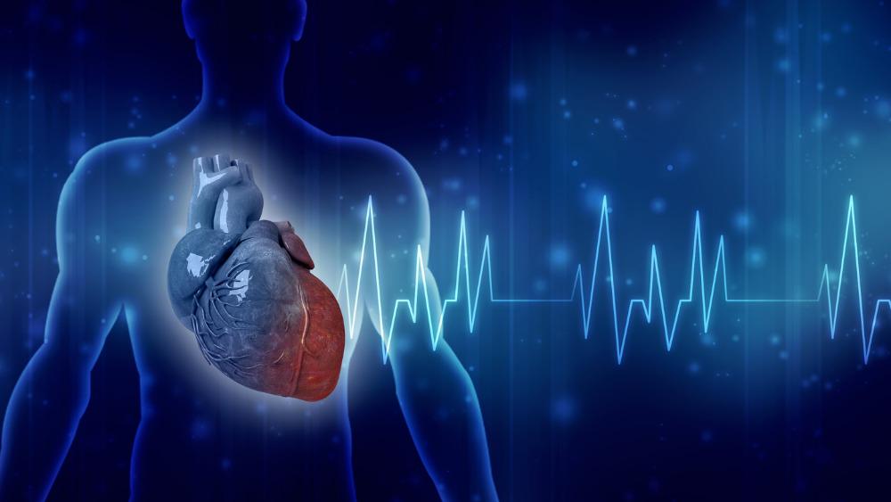 ilustração de um coração dentro de uma silhueta com um traçado e ondas de eletrocardiograma